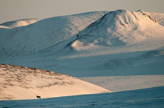 Photograph Arctic wolf by Ivan Kislov on 500px