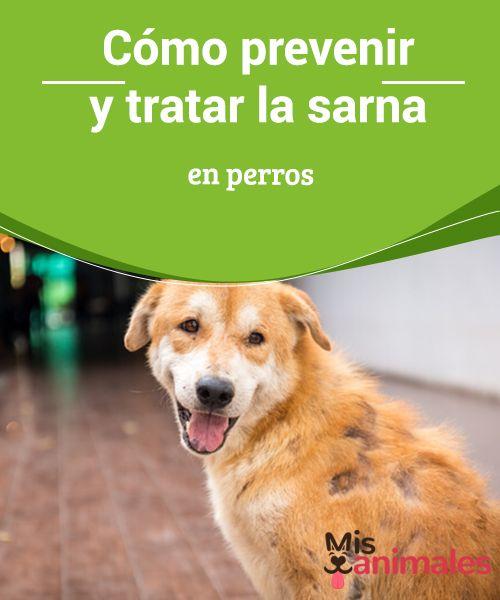 Contagio de sarna entre perros