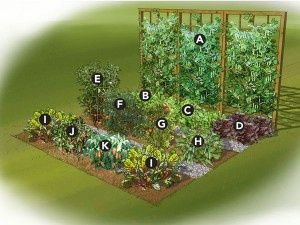 How to Make a Small Vegetable Garden Gardening Pinterest
