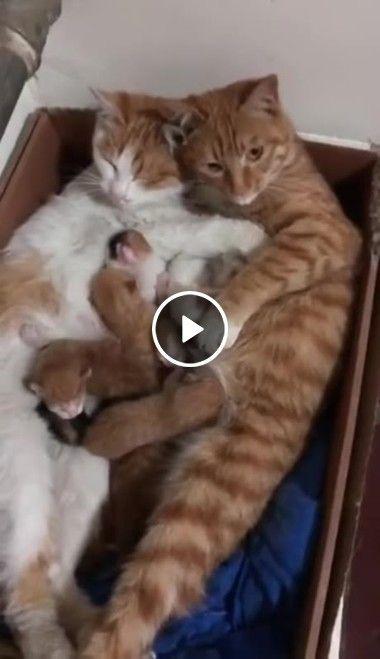 Família de gatinhos reunida descansando