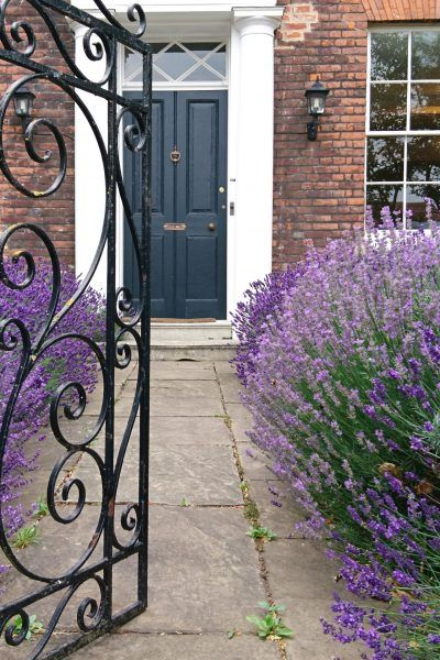 Lavender path front door