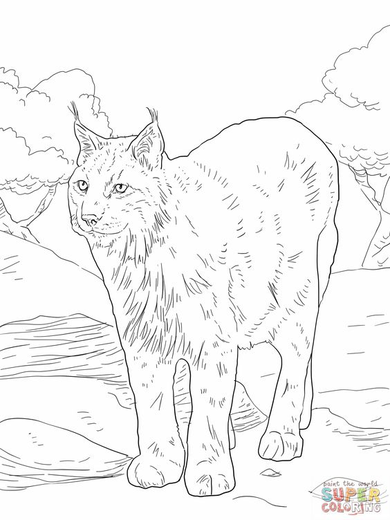 bobcat coloring pages | Lynx Coloring Pages Eurasian lynx coloring online