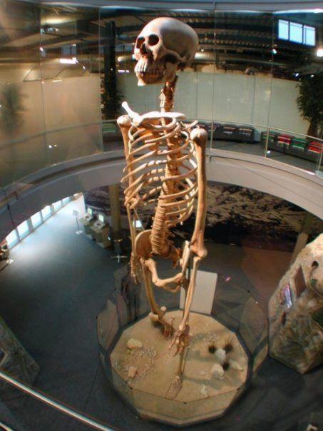 skeletal remains of the ecuador giants. just below the skeleton, Skeleton