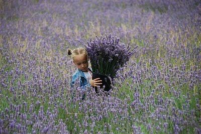 Ewa in the Garden: 23 Most Beautiful Lavender Photos - Hand Picked