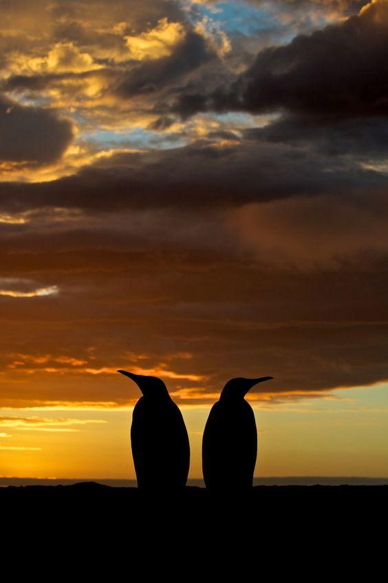 Penguin Silhouette byEli Spiegel