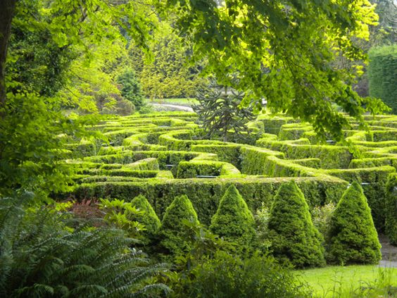 Get lost in a tall hedge maze:::: VanDusen Botanical Garden Maze (Vancouver, British Columbia, Canada):