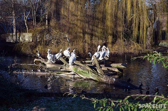 Zoologischer Garten - Berlin