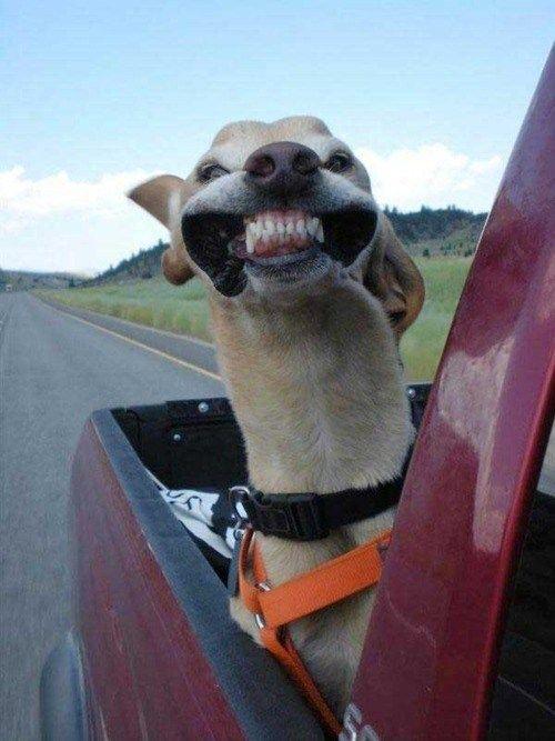 Look mom no cavities.  :)
