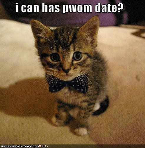 Date night kitty looks for prom date!