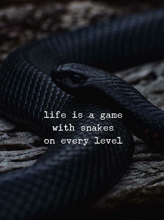 Snake Friends Quotes : snake, friends, quotes, Positive, Quotes, QUOTATION, Image, Description, Snakes, Every…, Snake, Quotes,, Quote,, Vibes