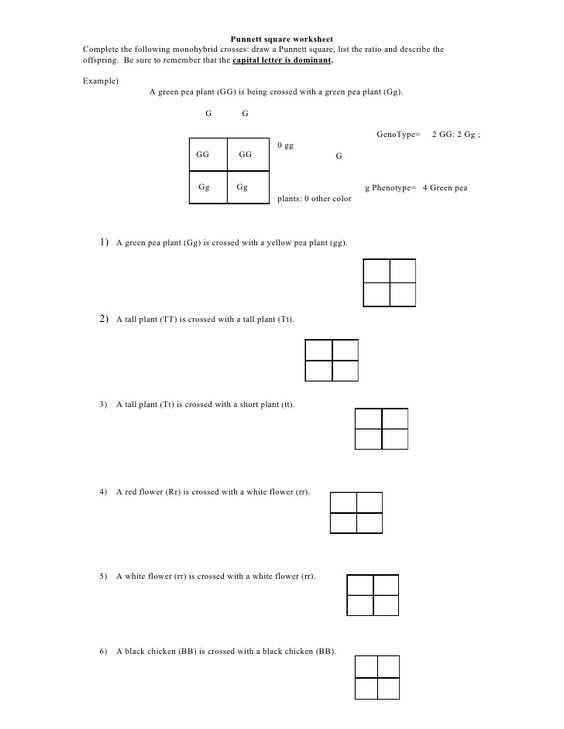 Punnett Square Worksheet 1 Answer Key - Delibertad