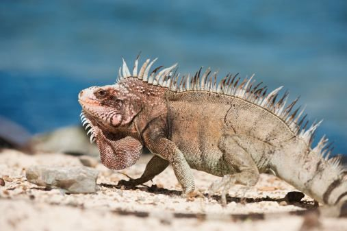 tropical desert animals The usual image we have of a desert is of giant cacti, unremitting heat and warm winters we don't tend to picture snow, but that is what occurs in temperate deserts.