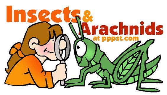 Arachnid Unit Study Insects & Arach...