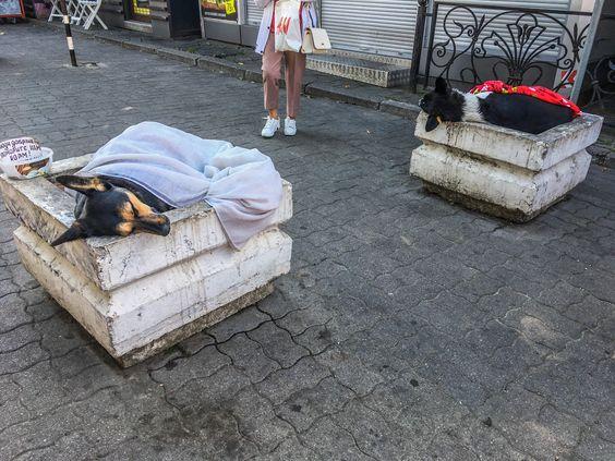 Уличные собаки Калининграда спят в клумбах под одеялами. Фото Жени Шведы
