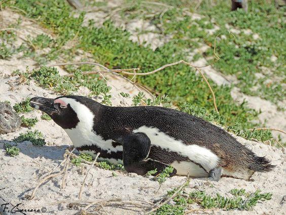 Fotos de pingüinos