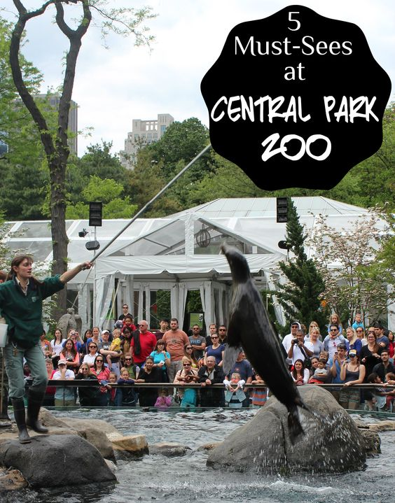 5 Must-Sees at New York's Central Park Zoo