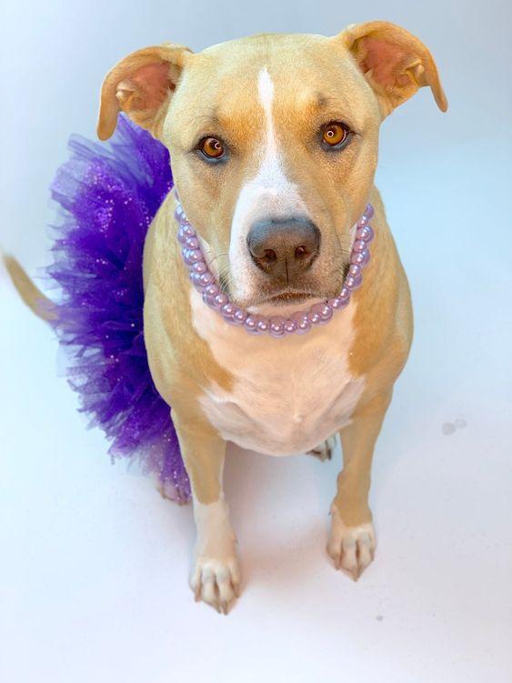 Purple Princess Dog Tutu: Cute Fluffy Princess Dog Skirt | Etsy