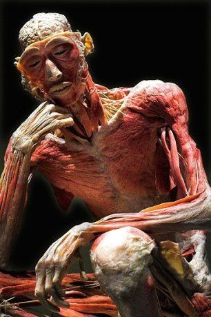 Body Worlds~amazing to be able to see the human body in this way.