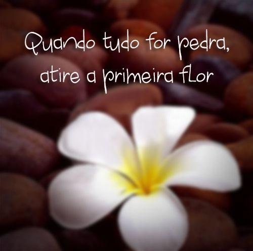 """""""Quando tudo for pedra, atire a primeira flor"""" xD - Augusto Cury:"""
