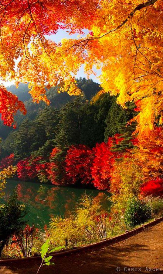 Autumn at Lake Yamanaka near Mount Fuji in Yamanakako, Japan • photo: Chris Asche on Flickr: