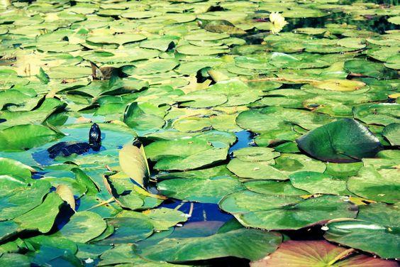 Swamp by Jesus Lara, via 500px