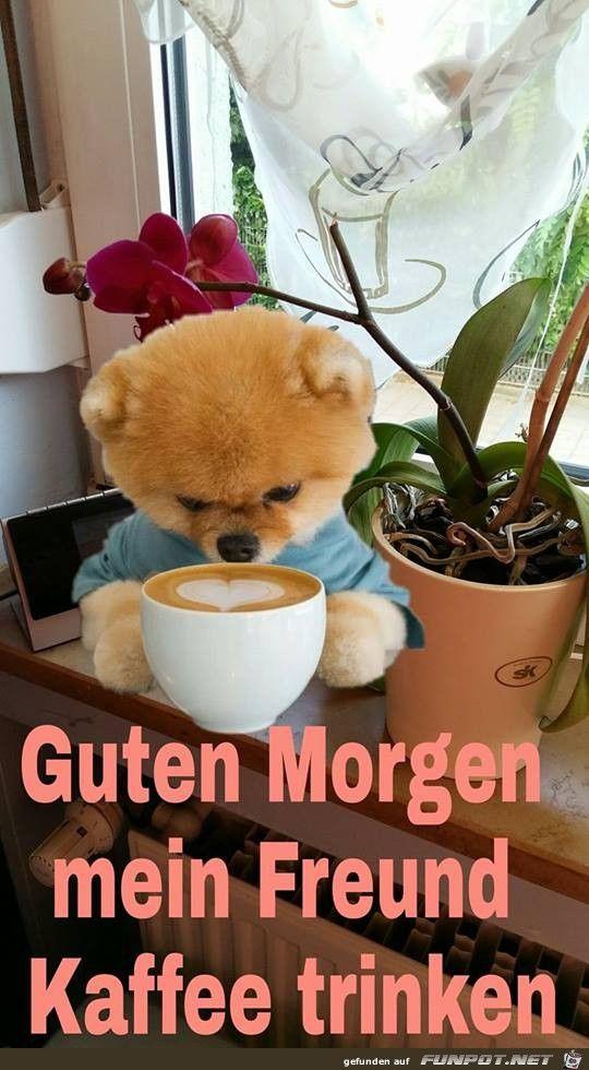 Guten Morgen Mein Freund Guten Morgen Bilder Guten Morgen