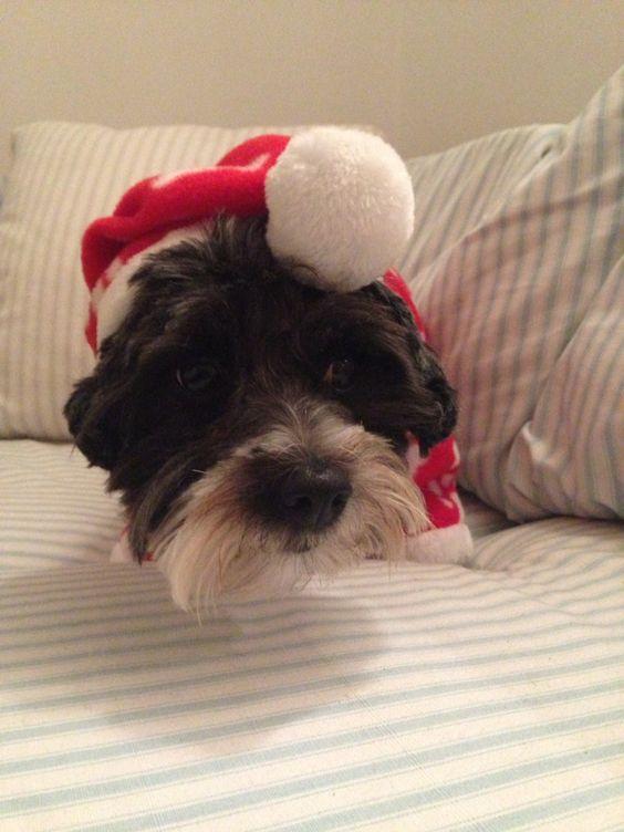 Awe Daisy cuteness at Christmas