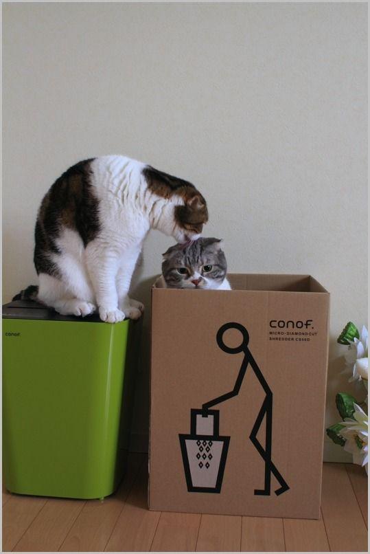 シュレッターとねこ 2 : スコとラグ*ぬいぐるみみたいな猫たち