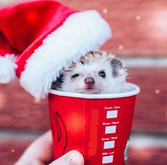 Hedgehog staying warm in a coffee cup http://ift.tt/2C14ZbN