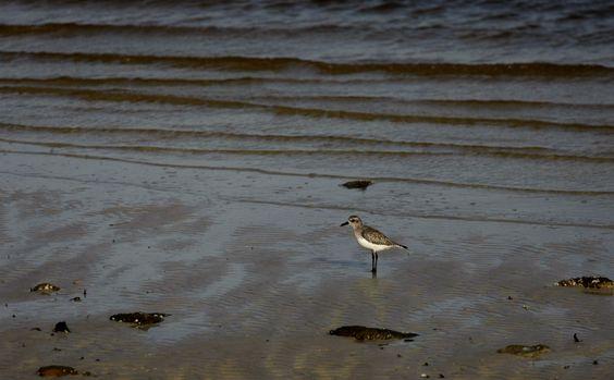 Bird on the beach--by gwen furey