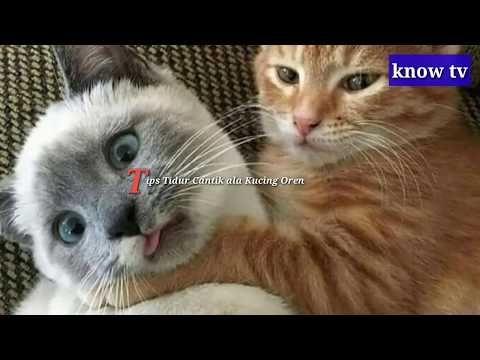 Kocak Gaya Tidur Kucing Oren Ini Bikin Ngakak Youtube Kucing Gambar Bergerak Gambar