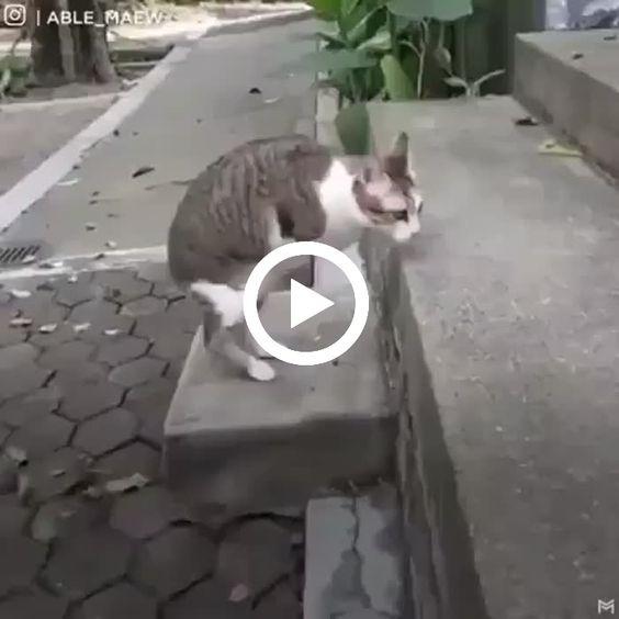 Esse gatinho é uma lição para nós meros humanos