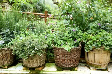 Herb Garden Inspiration & Ideas {Over 50 Pots, Planters, and Containers}