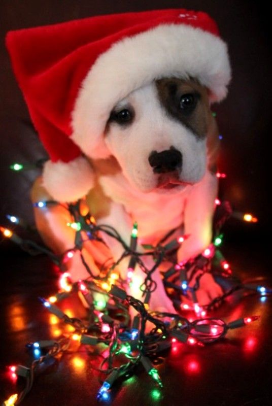 Cute Christmas picture Animal-I should do this with my puppy!