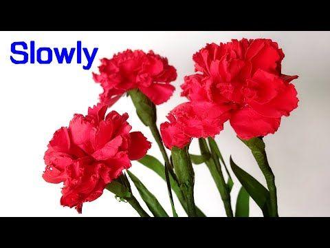Abc Tv Como Hacer Una Flor De Papel De Clavel Con Perforadora De Formas Lentamente Youtube In 2020 Paper Flowers Crepe Paper Flowers Tutorial Carnations
