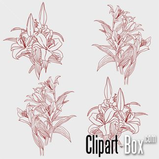 CLIPART LYS FLOWERS SKETCH