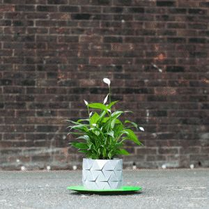 Begum and Bike Ayaskan's Growth plant pot expands with its occupant