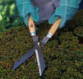 Detalle de herramienta para la poda de árboles