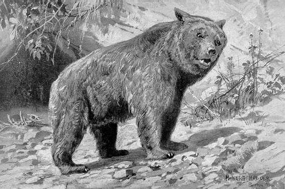 Der Höhlenbär (Ursus spelaeus) im Eiszeitalter war ebenso ...