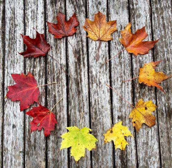 Autumnal Soul : Photo