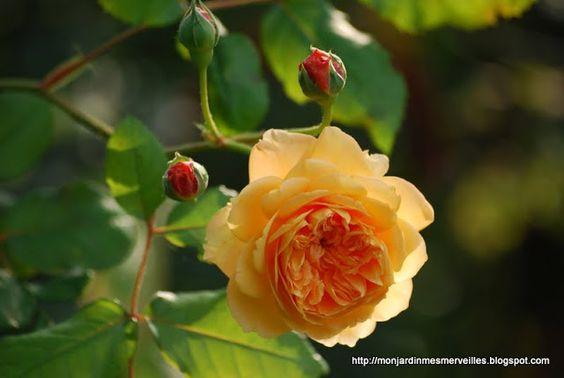 Meu jardim Meu Maravilhas