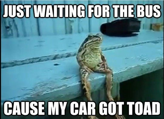 Toad...