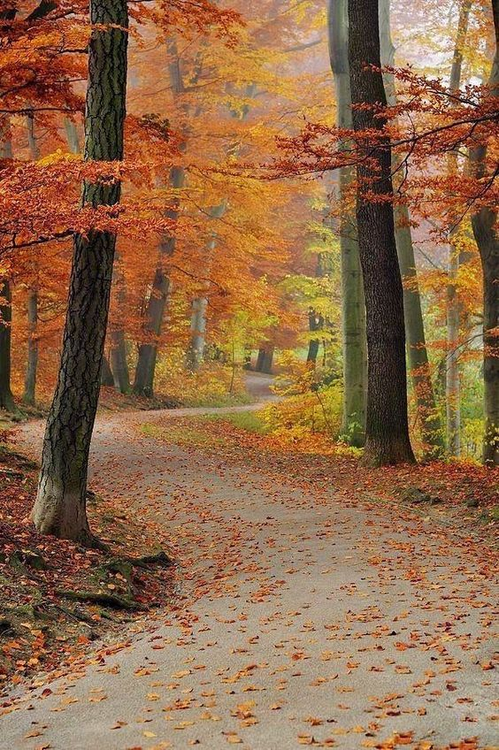 Fall/Autumn