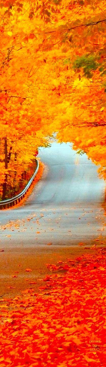 Gorgeous Autumn leaves | LOLO❤︎
