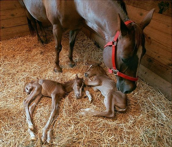 Mama horse and twins!