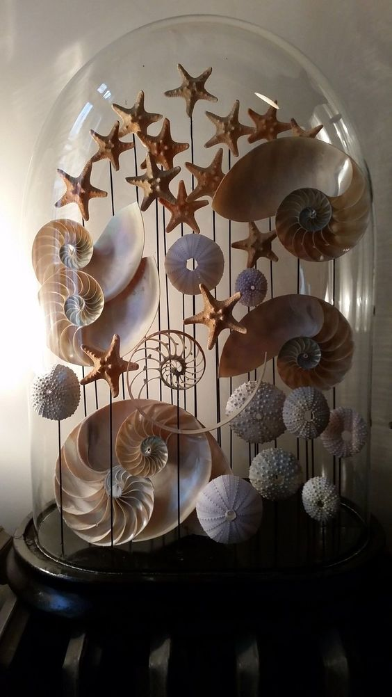 Shell Art Cloche.                                                                                                                                                      More
