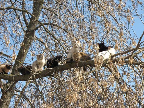 Как я Оказался на Дереве. Дневник Кота Васи | Дневник кота Васи | Яндекс Дзен