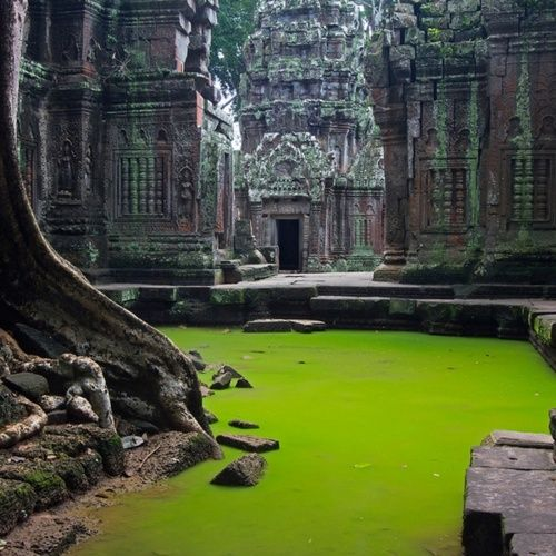 Ta Prohm Temple, Cambodia : intense green algae