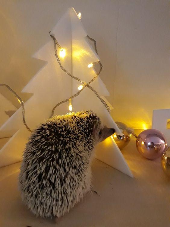hedgehog with Christmas  trea