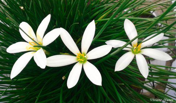 Flores do jardim da minha mãe! Minha querida mãe que é a flor mais bela entre todas elas!